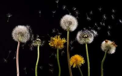 Alergias: Madrid activa la información sobre el nivel de polen