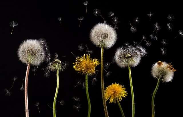 Campaña de alertas diarias sobre los niveles de polen en Navarra