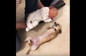 mascotas y bebes