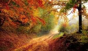 imagen de bosque en otoño para hablar de