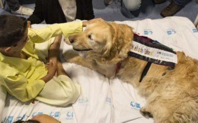 La terapia asistida con perros reduce el dolor y la ansiedad en los niños ingresados en la UCI