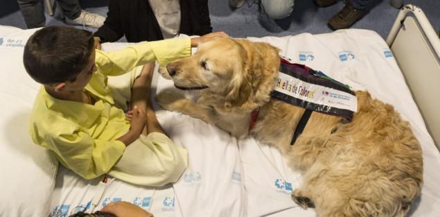 terapia asistida con perros y niños en hospital